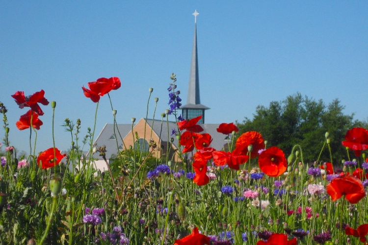 img_campus_wildflowers-sanctuary.jpg