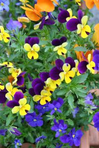 img_missions_plant-sale-fall.jpg